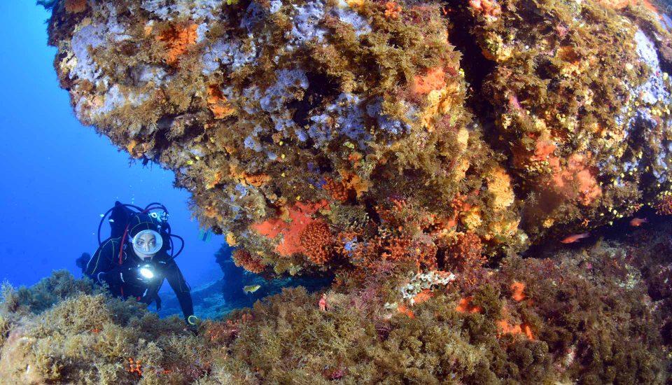Cabin Charter Eolie - Scilla - Diving 2 - Vacanza in Barca a Vela - Viaggio in Barca a Vela - Calabria - Sicilia